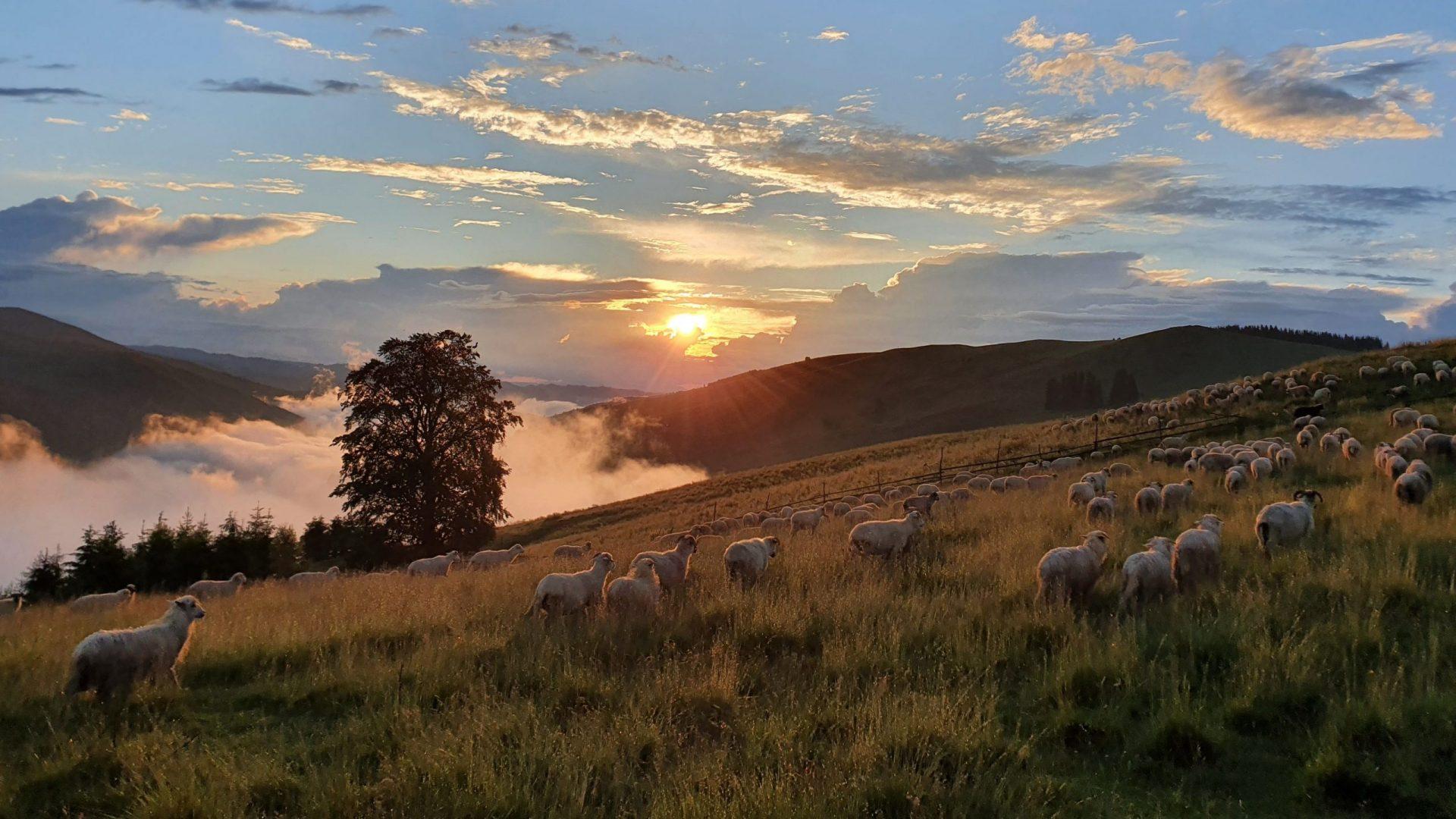 îngrăsământ eco naked sheep spr